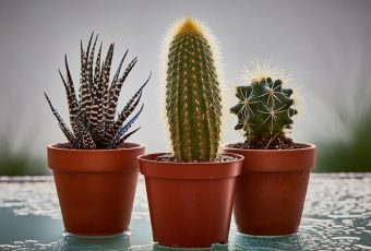 10 Best Indoor Plants To Grow Without Hassle
