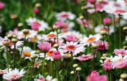 Interesting Uses Of Baking Soda In The Garden