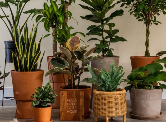 Top 5 New Plants For 2020