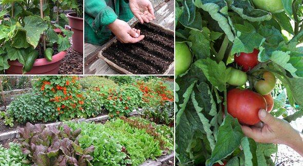 Grow Veggies In The Garden.jpg